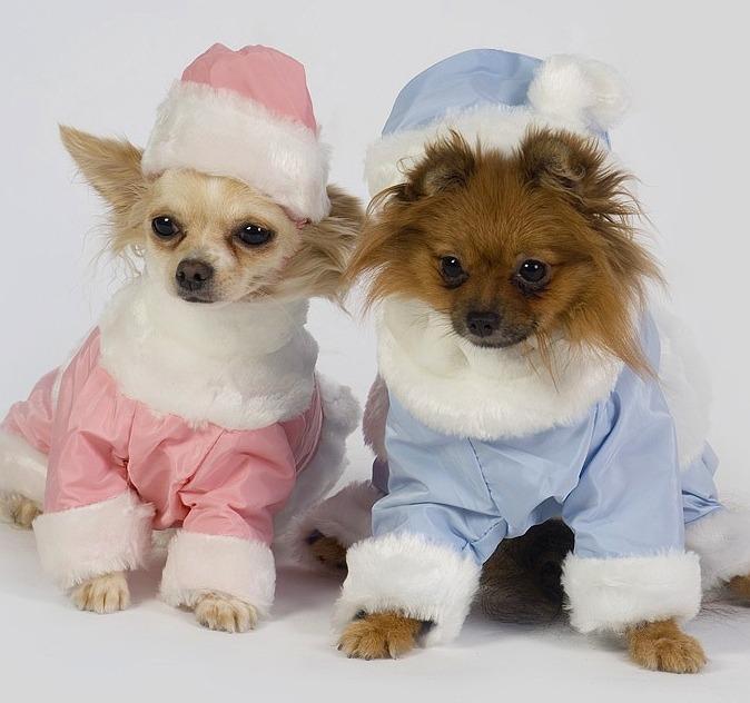 пошив одежды для собак мытищи